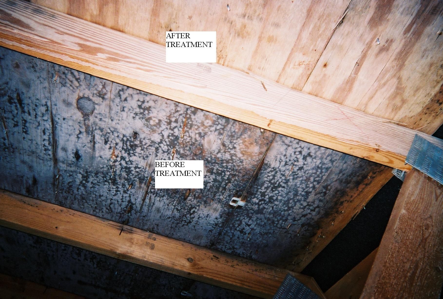 Call Us For Professional Attic Mold Removal