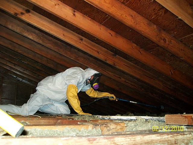 Your Leader in Professional Mold Remediation and Mold Removal – Buffalo NY
