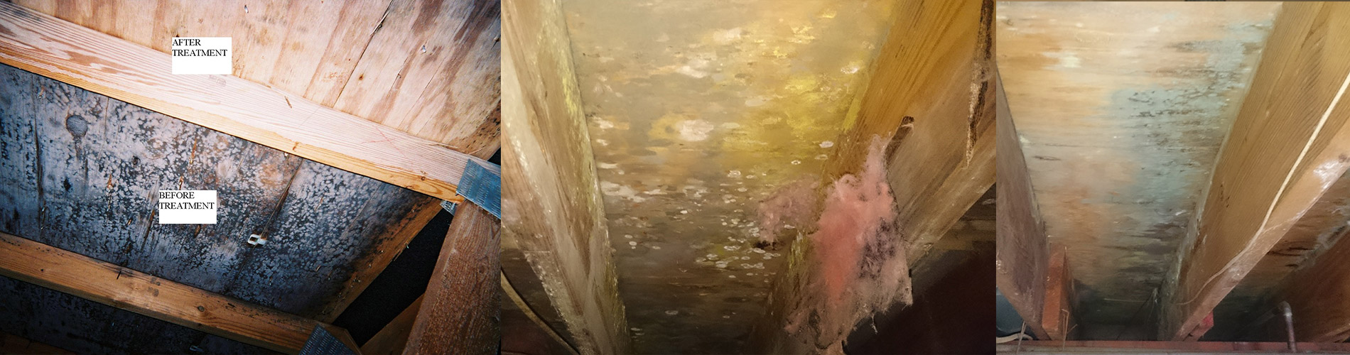 Attic, Basement, and Crawlspace Mold Removal